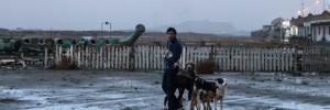 dogman_2